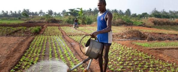 AFRICATogo-2014-Landwirtschaft_topic_stage