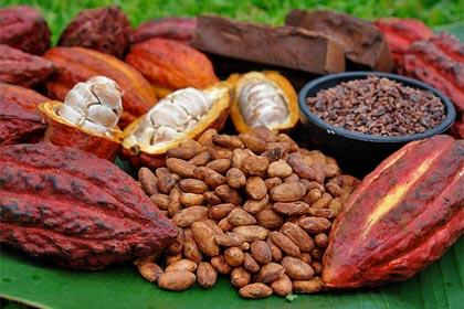 logo bidezko merktaritza kakao