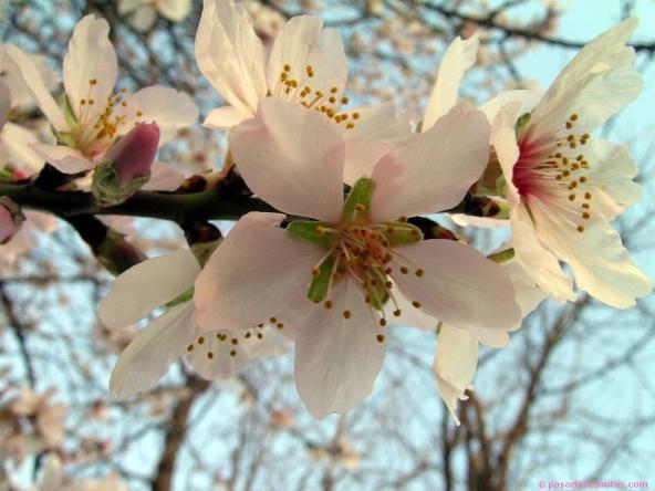 logo mayo flores sagarrondoa