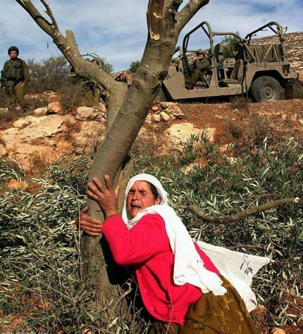 logo palestina olibondoari heldutako emakumea